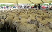 Sõmeru lambapäeval